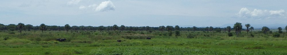 Africa 2012 600.JPG