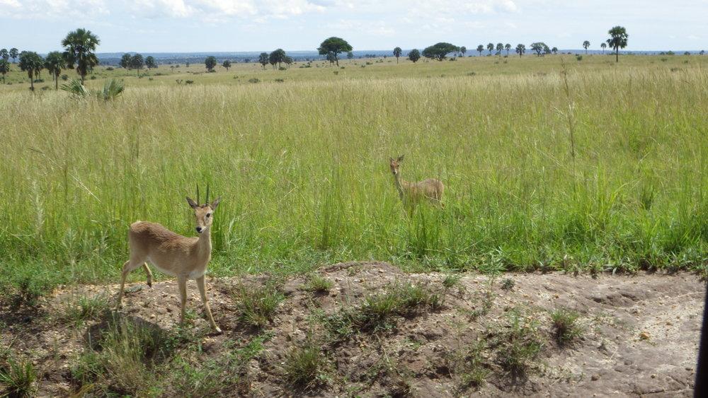 Africa 2012 590.JPG