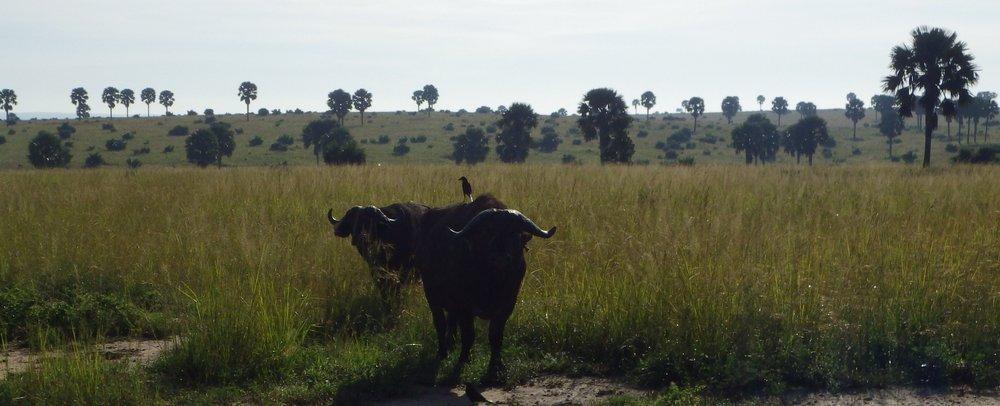 Africa 2012 656.JPG