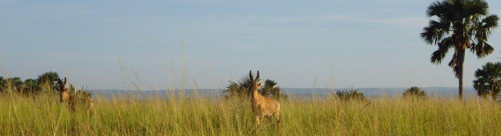 Africa 2012 636.JPG