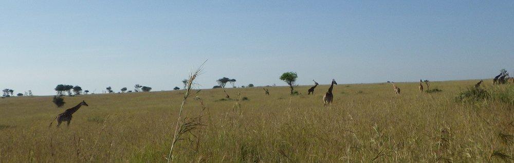 Africa 2012 670.JPG