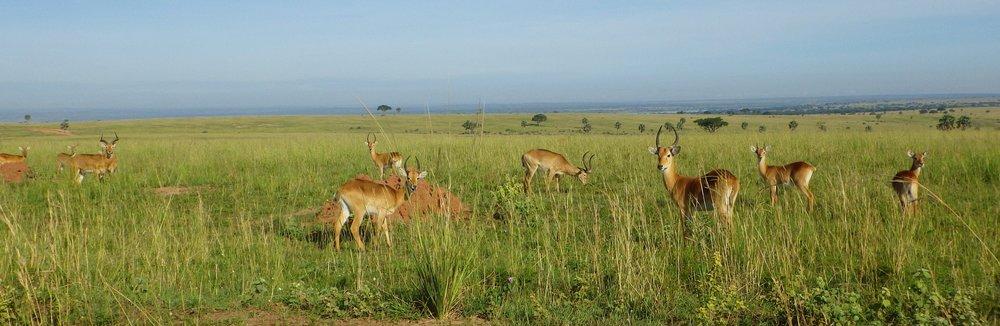 Africa 2012 659.JPG