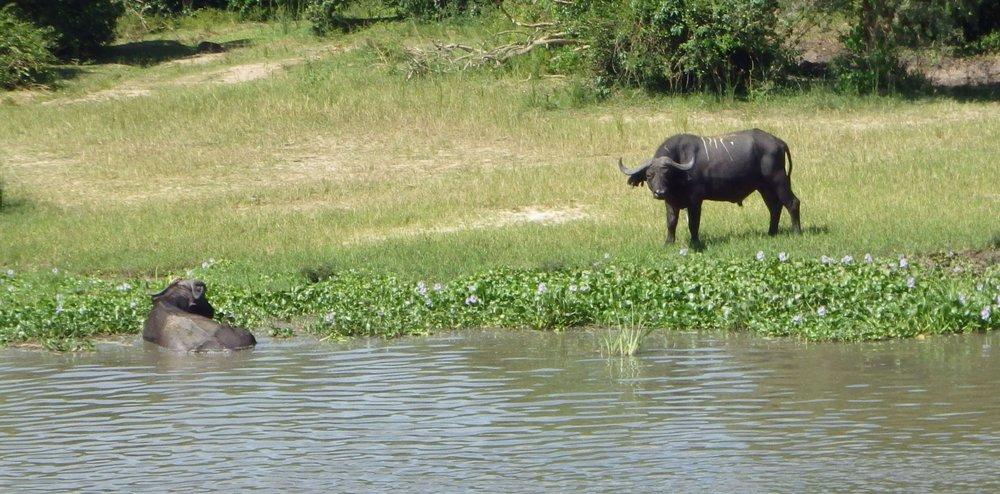 Africa 2012 733.JPG