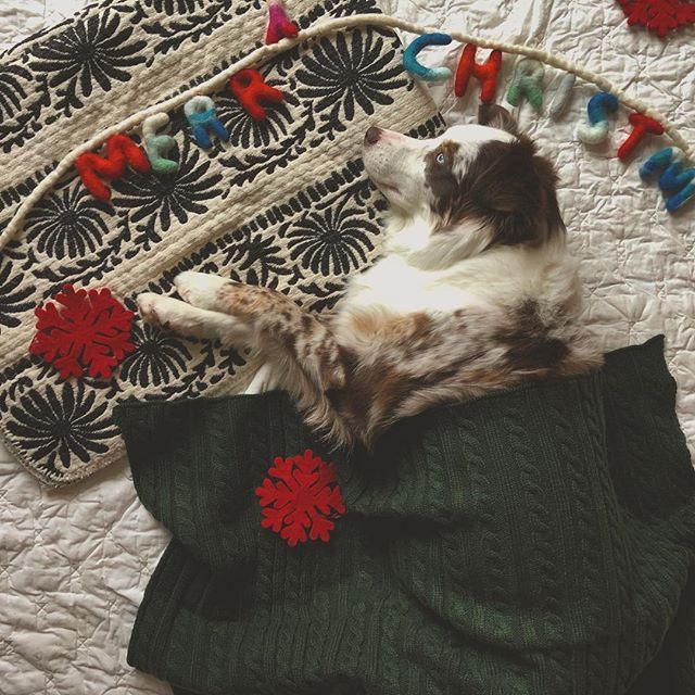 ❄️❄️❄️❄️❄️❄️❄️❄️ Good night 🌙 and sleep 😴 tight. Hope all my furry friends have wonderful and blessed holiday. 👼 #happyholidays  #dogsofinstagram  #petofinstagram  #holidayseason  #letitsnow  #merrychristmas ❄️❄️❄️❄️❄️❄️❄️❄️