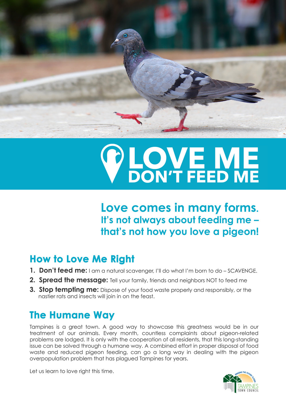 pigeon poster 1.jpg
