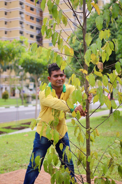 Tree Planting 2018 - 6 of 160.jpg