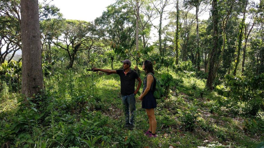leonie-cacao-farm