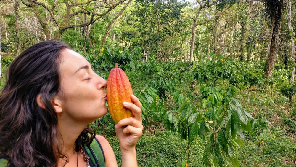 leonie-cacao-pod-farm
