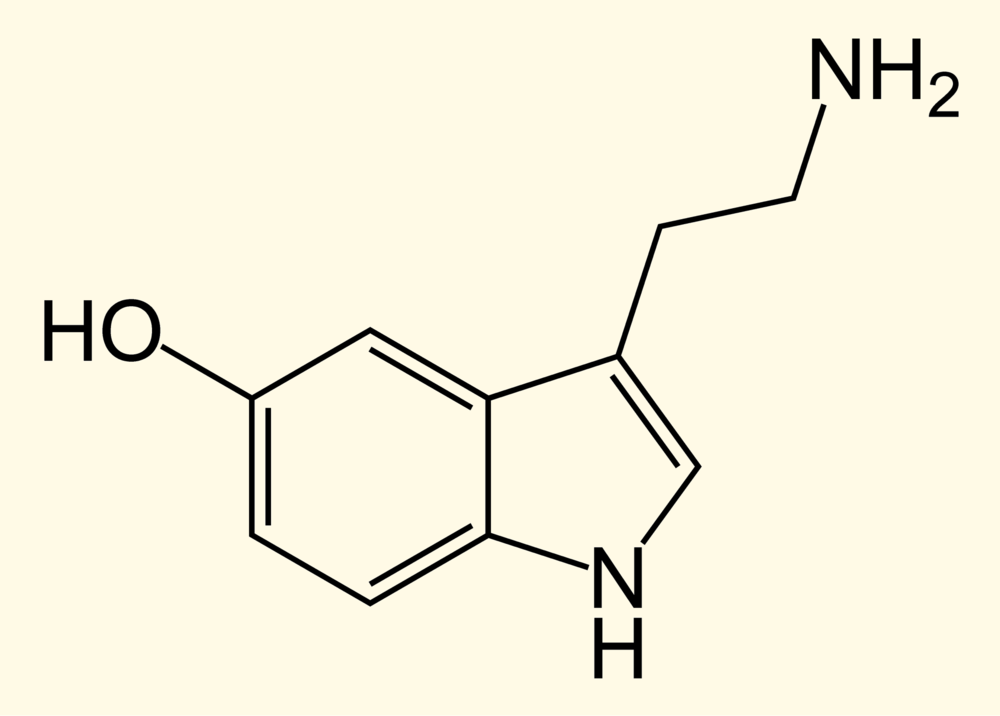 Serotonin reduces stress and increases happiness.