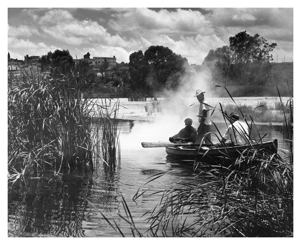 """December 8, 1958. Three man rowing amongst the reeds cleaning the Blue Dam in Homestead Park, Mayfair (Johannesburg)."" Photo by Hermann Painczyk.  © Rand Daily Mail / Times Media"