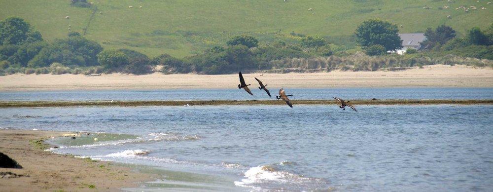 geese-landingweb.jpg