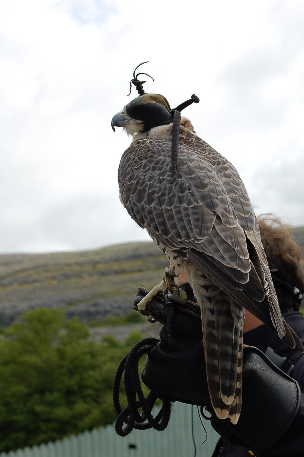Birds of Prey    photo by L.D. Van Cleave