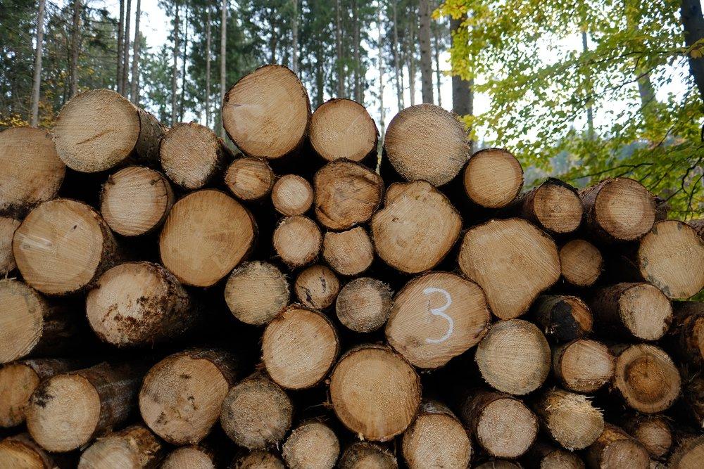 German Forestry    photo by L.D. Van Cleave