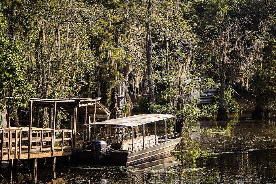 Swamp Tours near New Orleans