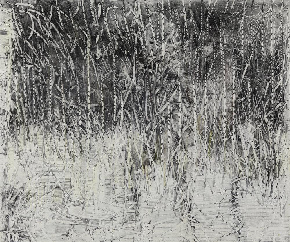 06_cornfield copy.jpg