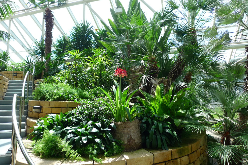 Interior Landscapes - Maintenance Only