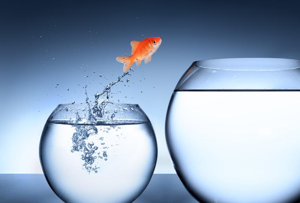 iStock-477569935 bigger fish bowl.jpg