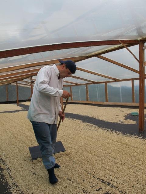 Hector raking