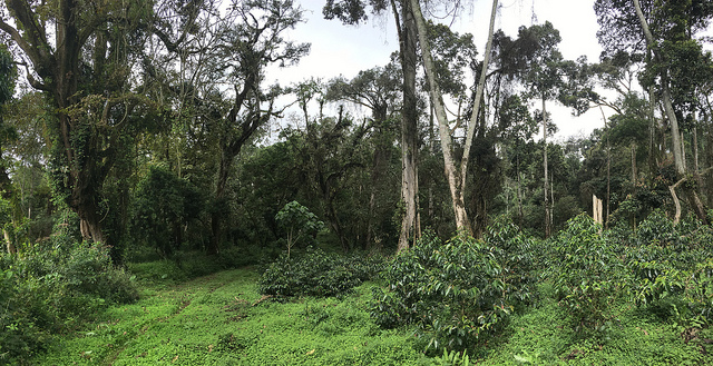 Is this coffee farm better if it has an exciting story?