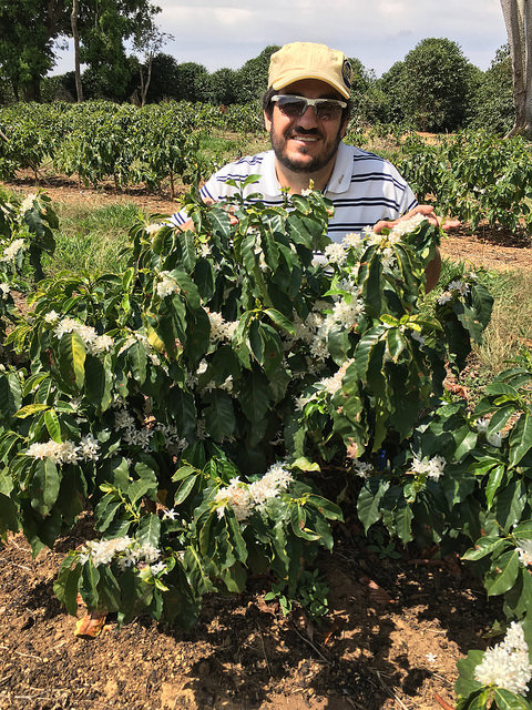 Luiz Paulo with yellow bourbon 42, the very first strain of yellow bourbon produced in Brazil