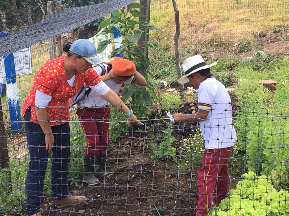 Children tending to their vegetable garden beside the school on Antonio Saavedra's farm in Tolima, Colombia