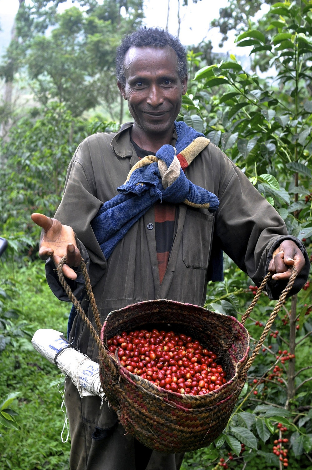 A coffee picker from Gesha Village, Ethiopia. Just look at that selection!