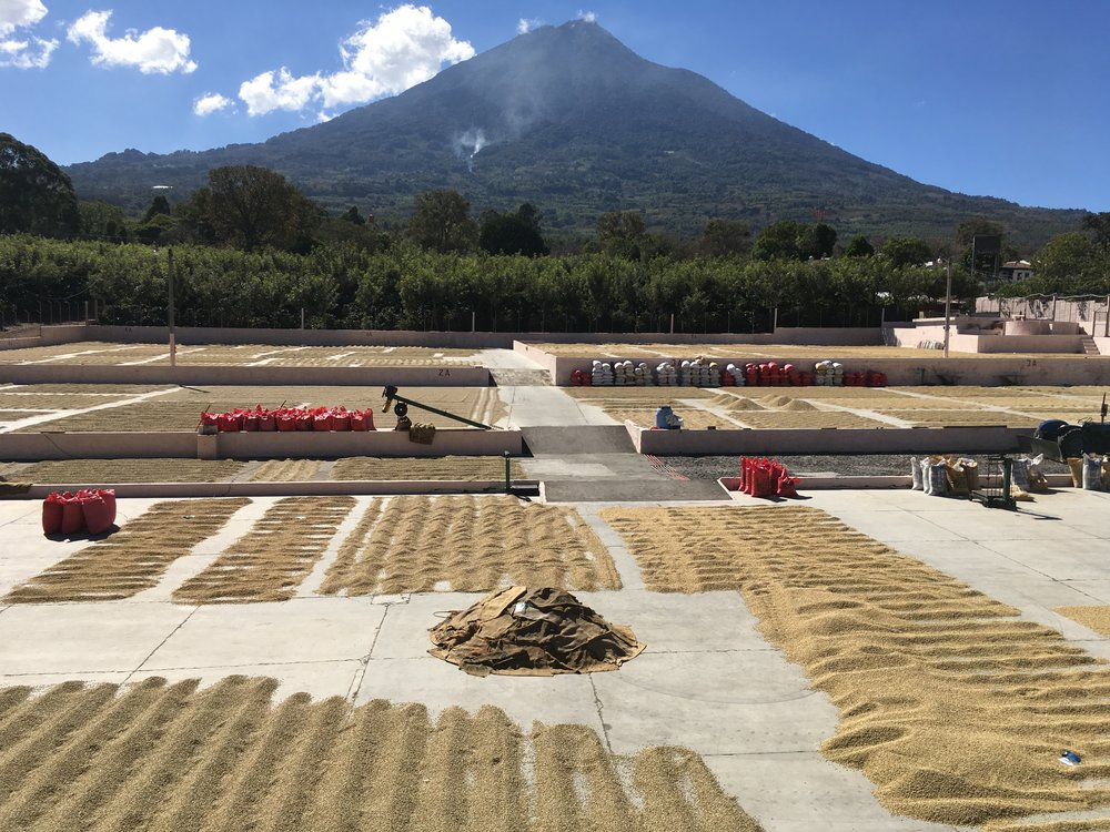 Bella Vista Mill, Antigua, Guatemala. Luis Pedro Zelaya Zamora is a fourth generation coffee producer and he and his family have been our partners since 2013. The staff at Bella Vista both run the processing facilities and manage many of the farms delivering coffee to Bella Vista.