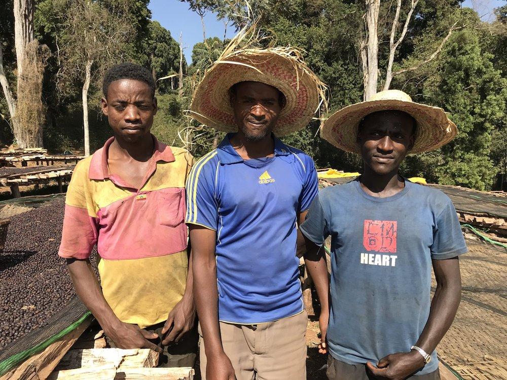 Tesema, Hadji, Goye - coffee sorters for naturals