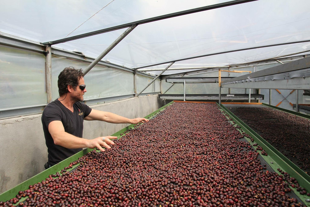 Jamison Savage and his three-tiered drying beds, Finca Deborah, Panama