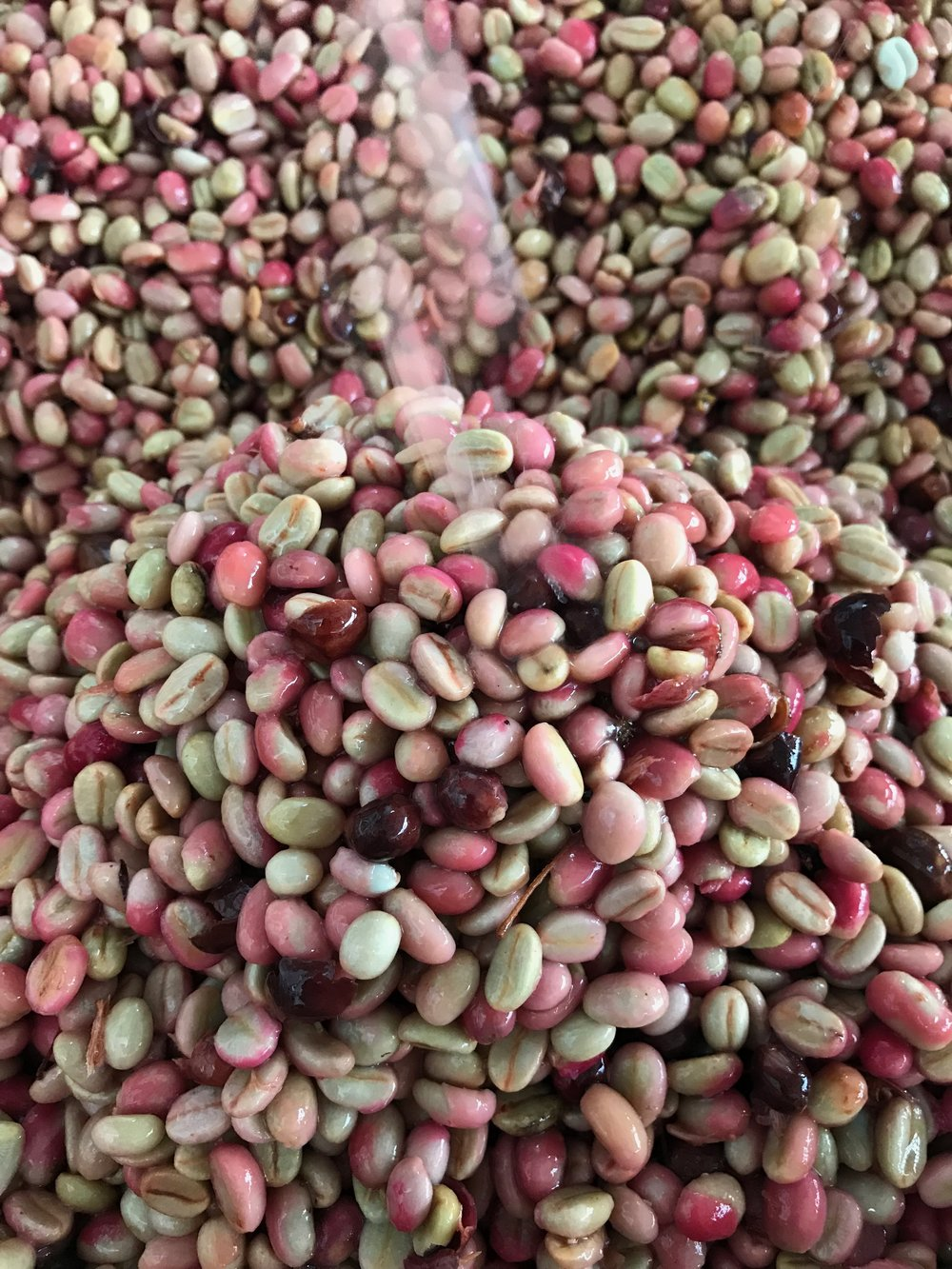 Lactic fermented beans after depulping