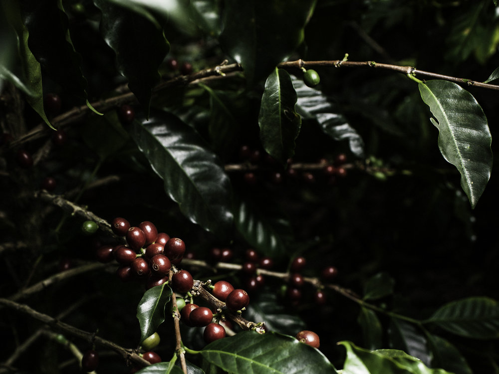 2014_03_07_tk_for_better_coffee_honduras_hasselblad-348_final.jpg