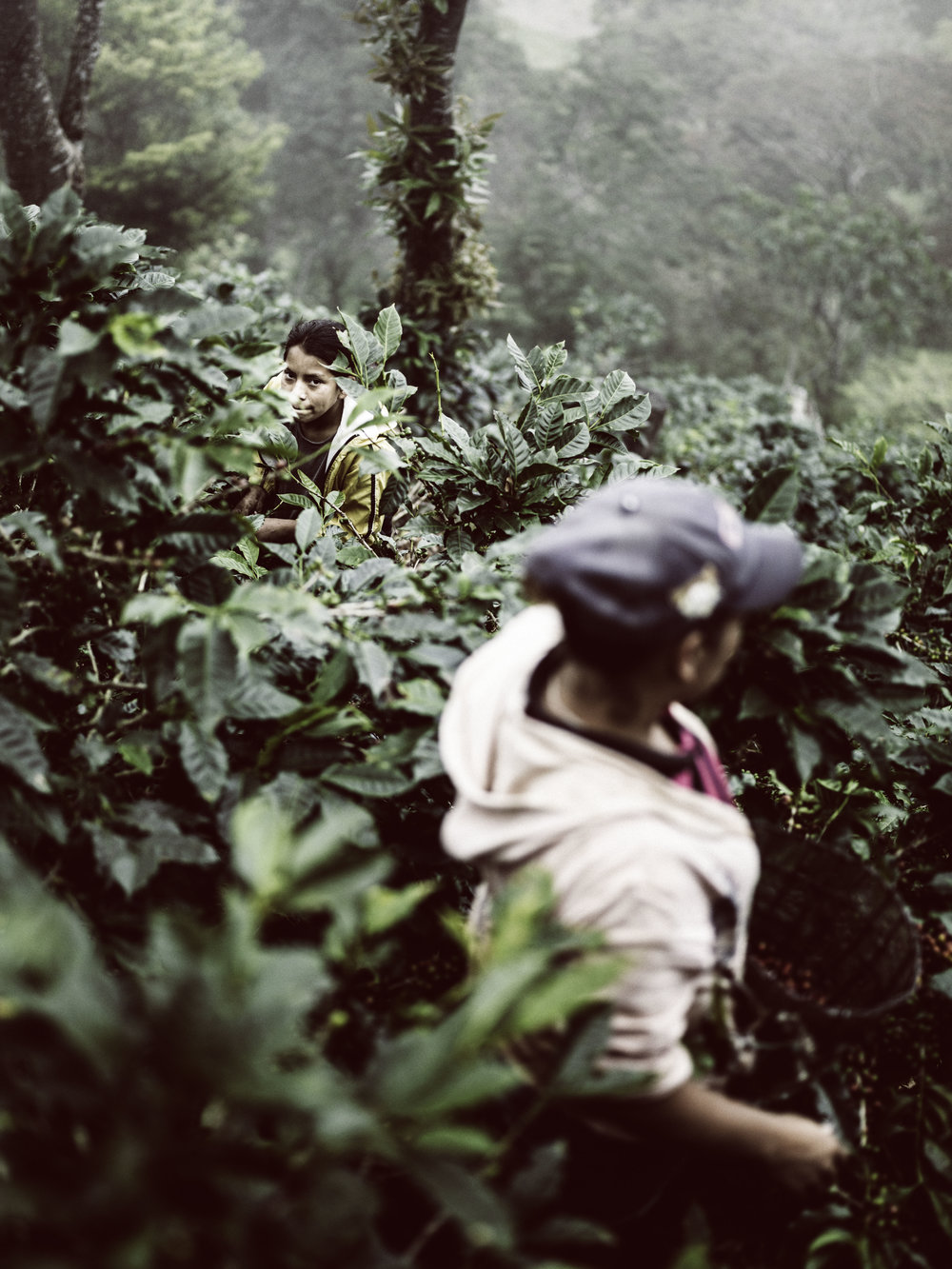 2014_03_07_tk_for_better_coffee_honduras_hasselblad-491_final.jpg