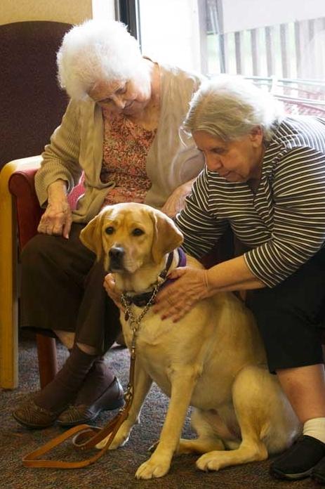 Fleischman Residence dog, Bella