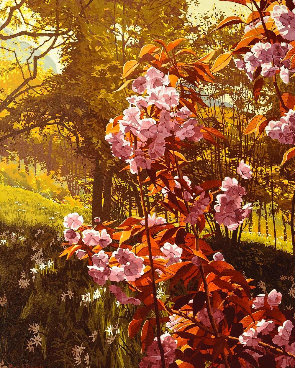 Prunus en fleurs dans un champs de narcisses