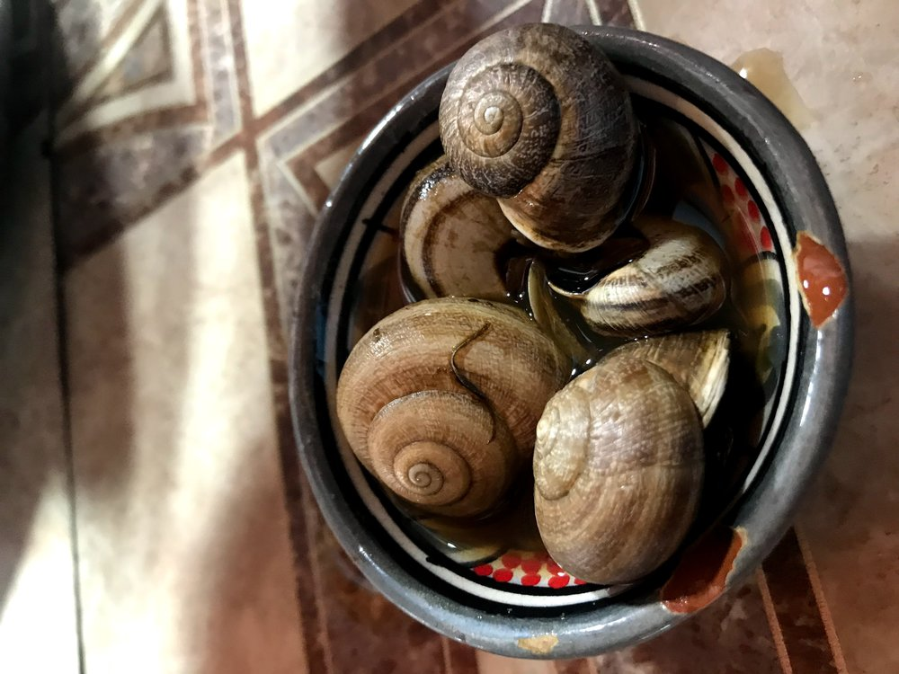 Des escargots (snails)! This Moroccan street food is unlike it's French expensive/elite-counterpart. Cooked in a soup of spices and herbs, this dish can be found in the medinas of Moroccan cities, although most people have eaten them in Jemaa El Fna in Marrakech. Photo Credit: L. Fisher, Spring 2019
