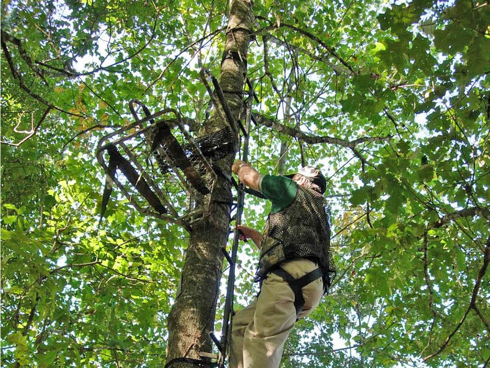treestand-0001.jpg