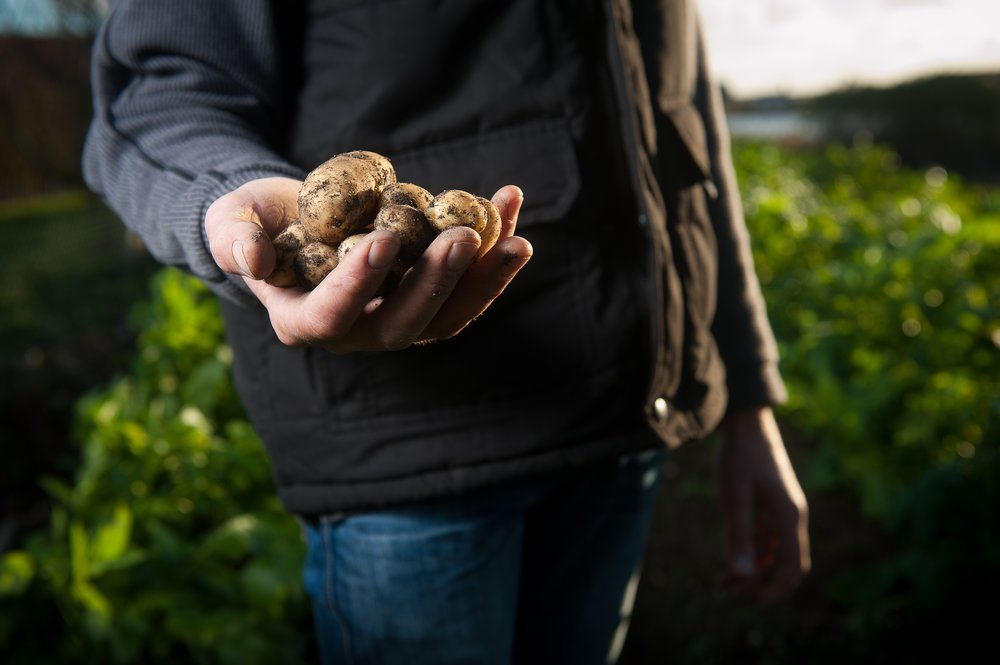 FARMS - Take your sales online with a simple online store