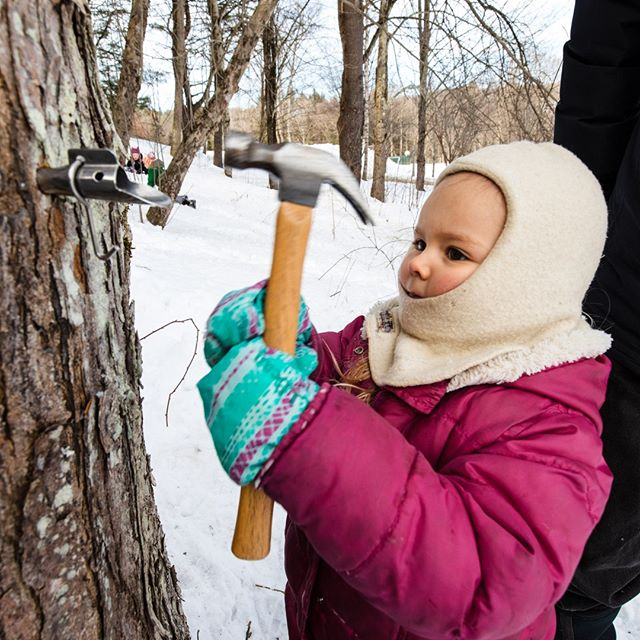 Our preschoolers got out there to tap the first maple tree of the year! ⁣ ⁣ #putneyvt #discoverputney #thisisvt #independentschool #maplesyrup #vtmaple #naturalvermont