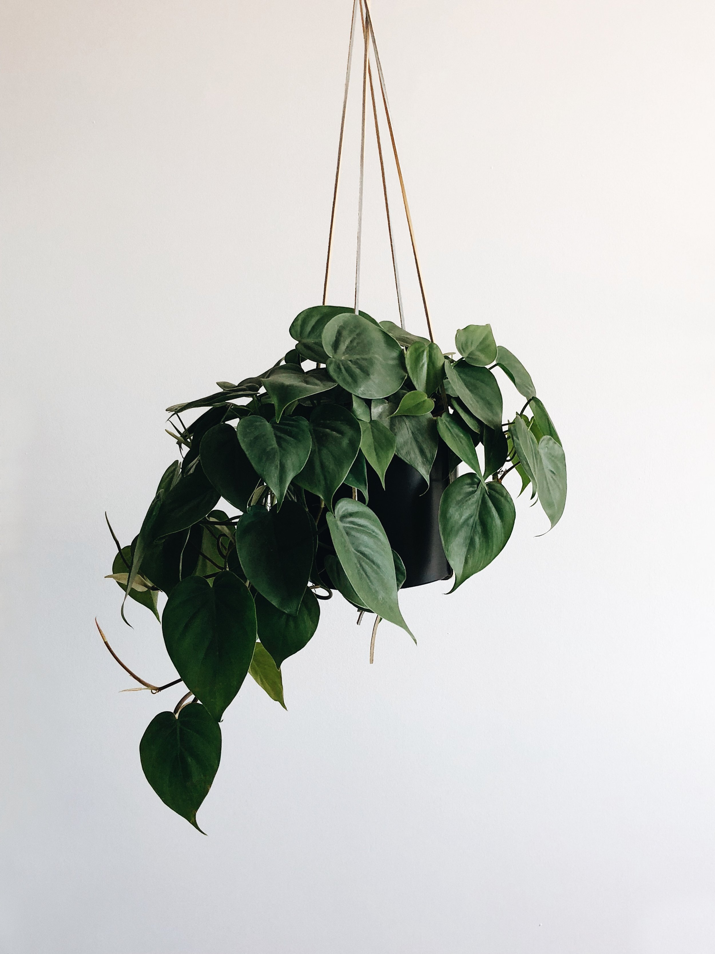 House Plants That Are Easy To Grow and Hard To Kill - Crewel