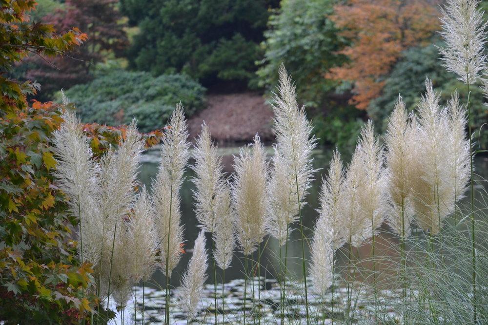 Sheffield Park Grasses.jpeg