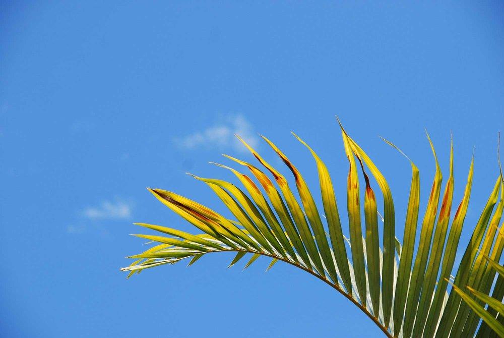 hawaii6.jpg