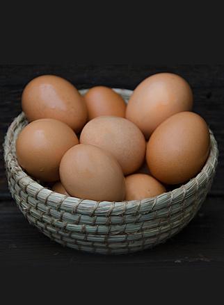 egg1img.jpg