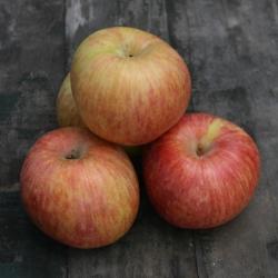 cuyama apple sq.jpg