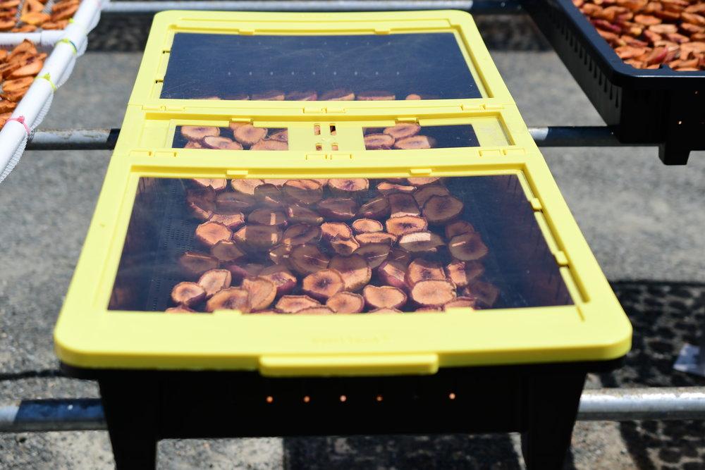 nectarine USDA test tray.JPG