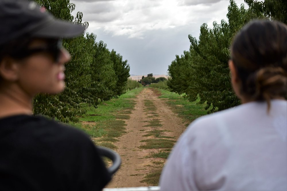 Orchard Ride.jpg