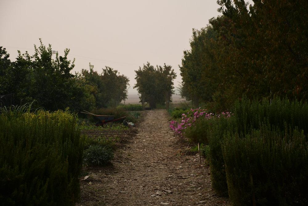Smokey Garden.JPG