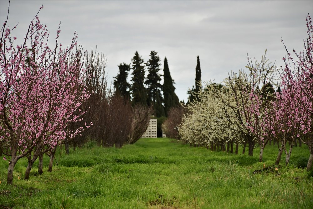 Spring at Frog Hollow Farm