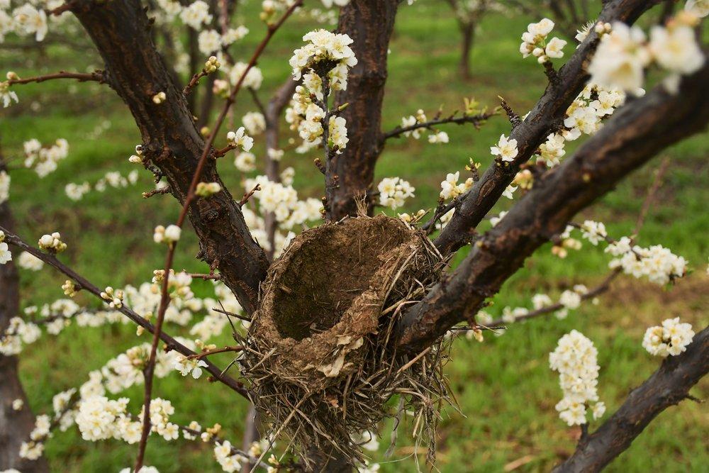 An Orchard Nursery