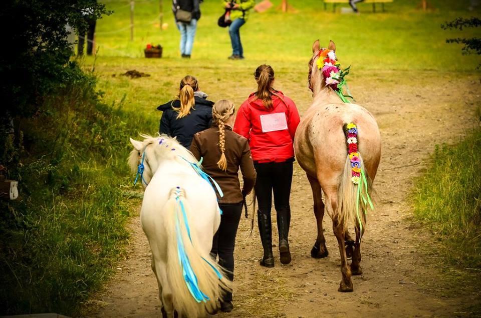 pyntede heste.jpg