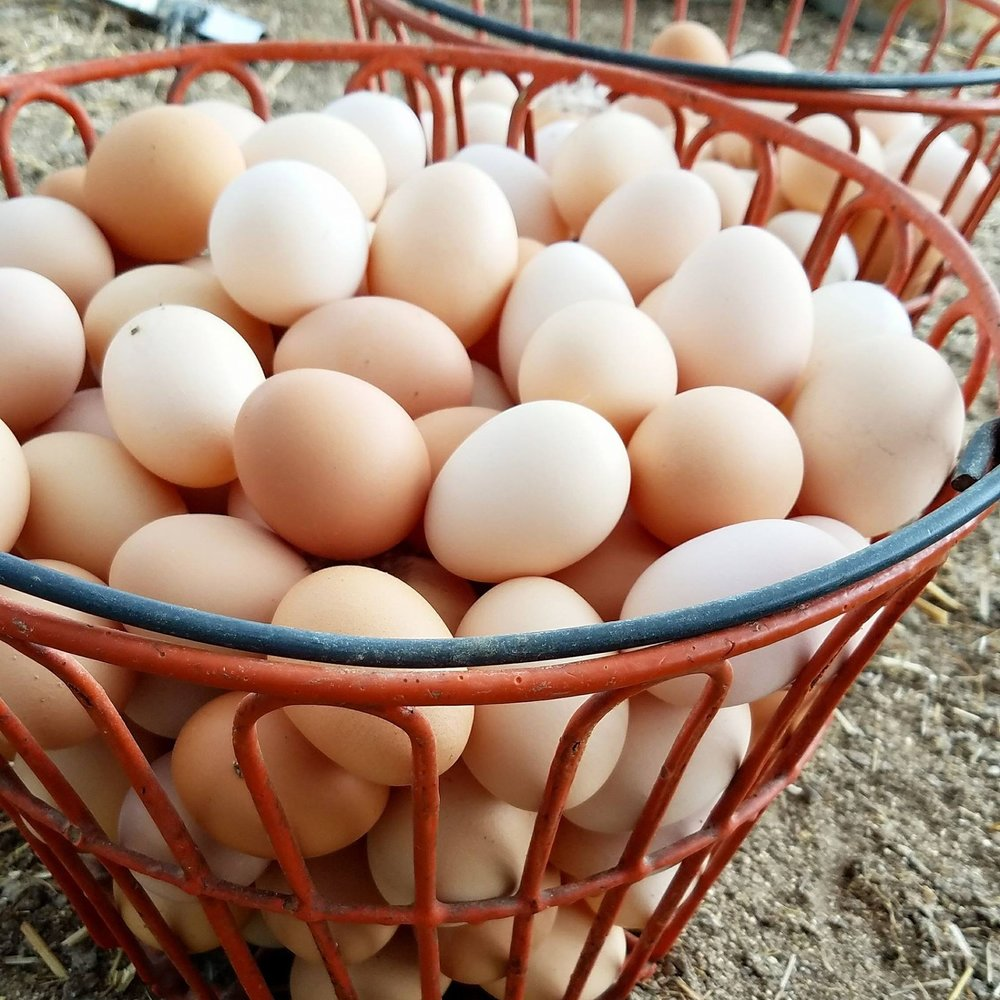 Laying Hens - Our laying hens are housed in a hoop greenhouse with deep bedding; during the summer we allow access to a grass run or use mobile coops for them to free range from. They receive a non-GMO grain ration year round.